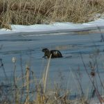 2009_0320WoverineCabin0047